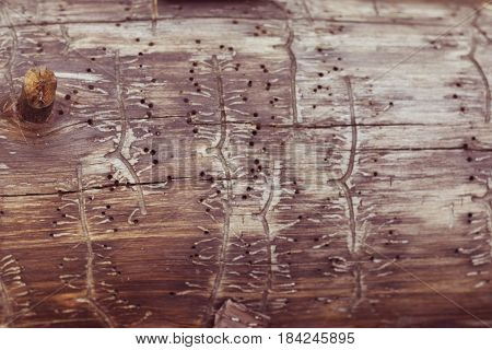 texture tree with traces of a bark beetle