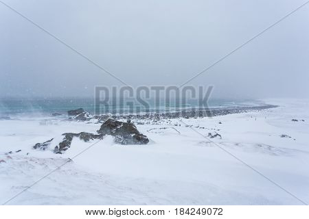 The blizzard over the coast of the Lofoten Islands