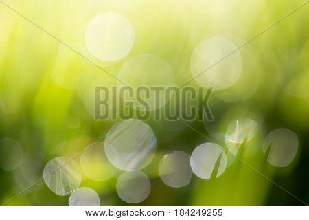Beautiful green bokeh nature as background. texture