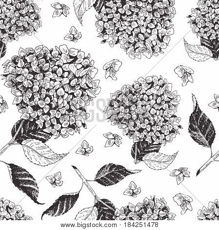 Vector hand drawn blossom seamless pattern. Engraved botanical art. Vintage illustration. hydrangea spring and summer blossoms. Botanic garden. Use for wedding card party invitation