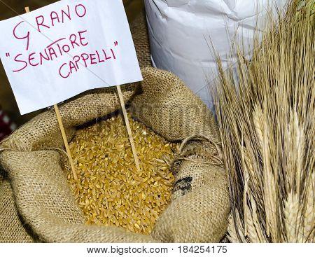 Wheat ears and grain