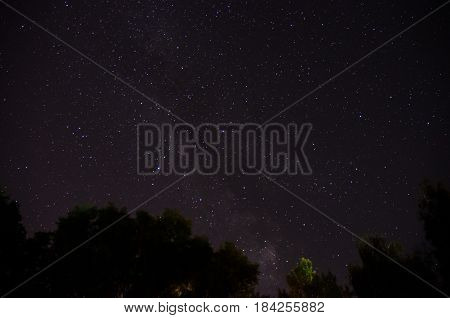 Forest Trees Under Milky Way In Night Sky