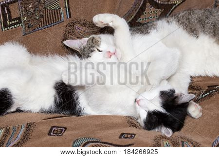 The cat is sleeping on the couch