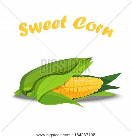 Very high quality original trendy vector illustration of sweet golden corn. Bunch of Corn. summer farm design elemnts