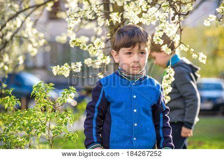 Adorable Blonde Kid Boy Portrait In Blooming Cherry Garden, Walking Outdoor