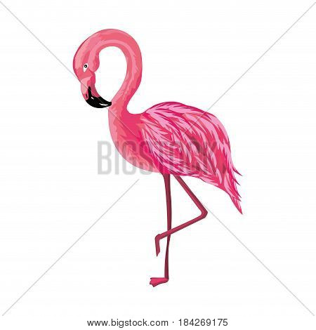 beauty and exotic flamingo bird animal, vector illustration
