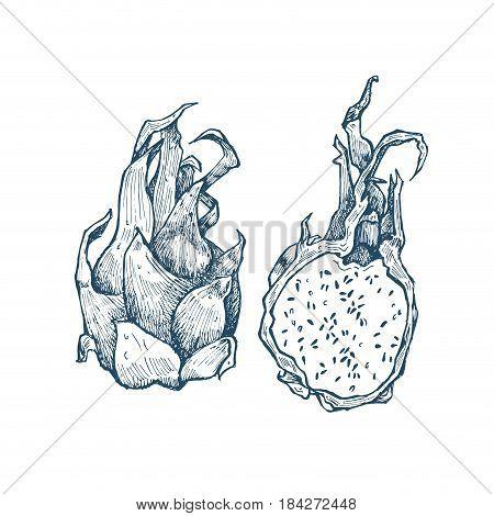 Hand drawn exotic monochrome fruits. Engraved style illustration. Vintage dragon fruit frame. Pitaya or pitahaya