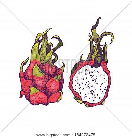 Hand drawn exotic colorful fruits. Engraved style illustration. Vintage dragon fruit frame. Pitaya or pitahaya