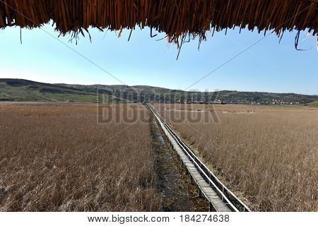 Landscape Of A Plain With Reed