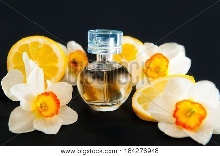 Orbicular perfume bottle surrounded by fresh Daffodils flowers and lemon slices isolated on black background. Yellow colour concept