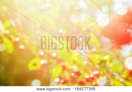 Summer background of blurred green foliage and red berries with patches of sunlight backlit