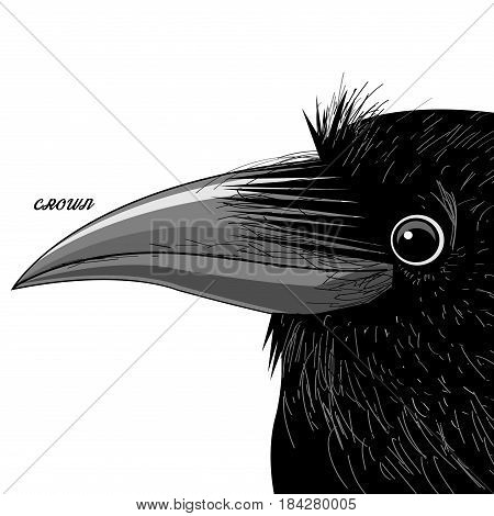 Vector portrait of a black raven on a white background