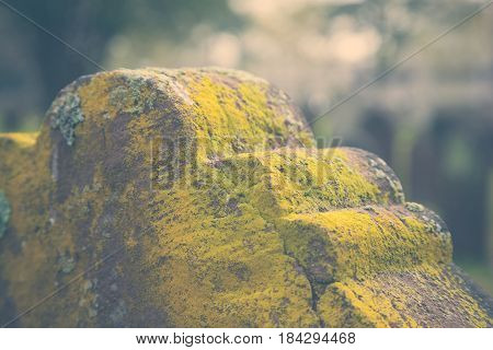 Moss On Old Tombstone