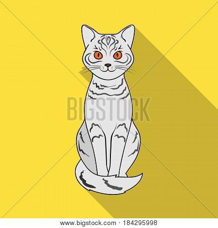 Gray cat.Animals single icon in flat style vector symbol stock illustration .