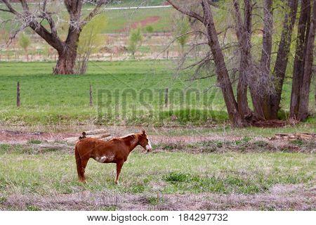 Horses at a farm in Durango, CO