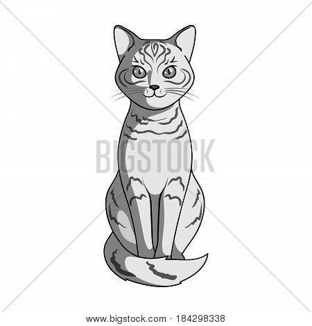 Gray cat.Animals single icon in monochrome style vector symbol stock illustration .