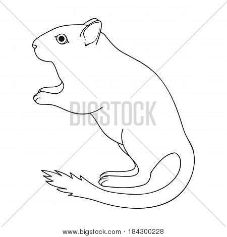 Gray gerbil.Animals single icon in outline style vector symbol stock illustration .