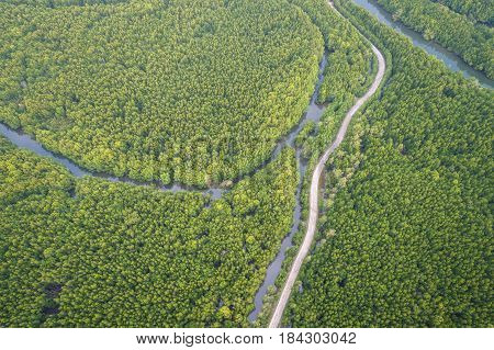 Road In The Green Mangrove Forest At Phang-nga Bay Southern Of Thailand. Aerial View From Flying Dro