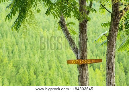 Picture of tree with a text of Go Green and pine forest background. Go Green concept