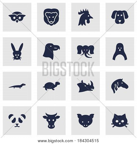 Set Of 16 Brute Icons Set.Collection Of Trunked Animal, Hog, Bunny And Other Elements.