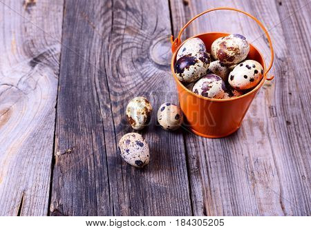 Fresh quail eggs in a bucket on a gray wooden surface top view