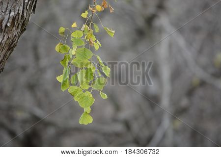 green leafs rest in an autumn tree