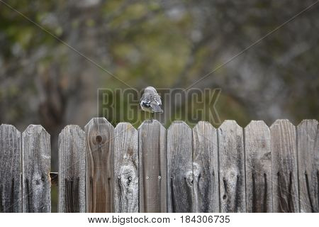 bird standing in a fence in autumn