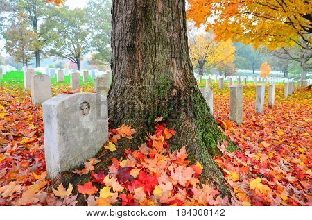 Gravestones in Arlington National Cemetery with fall leaves - Washington DC United States