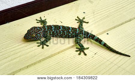 Cute Green Gecko Sits On The Wall