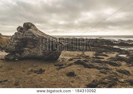 Large Driftwood Stump On Rocky Beach