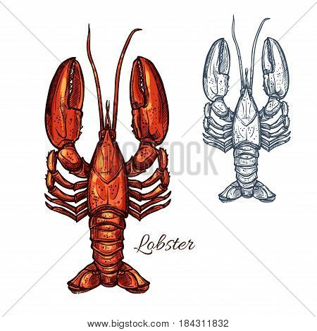 Lobster seafood animal sketch. Red lobster marine crustacean or freshwater crayfish isolated symbol for fish market label, seafood restaurant menu or fishing sport design
