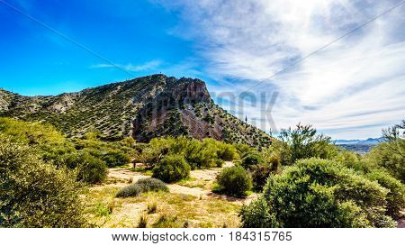 Mountains in the desert landscape with its many Saguaro cactuses and other cacti and shrubs along the Bartlett Dam Road in Tonto National Forest in Maricopa County Arizona USA