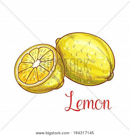 Lemon citrus fruit sketch. Fresh lemon fruit isolated icon with bright yellow zest and juicy slice. Tropical citrus fruit for farm market, juice and lemonade label design
