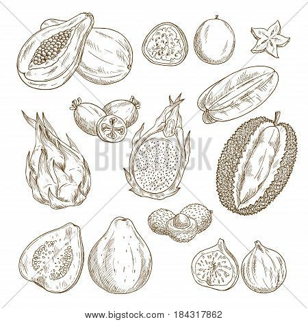 Exotic tropical fruit sketch set. Papaya, carambola, feijoa, passion fruit, guava, dragon fruit, lychee, durian and fig isolated icon for fruity dessert menu, tropical cocktail or drink label design