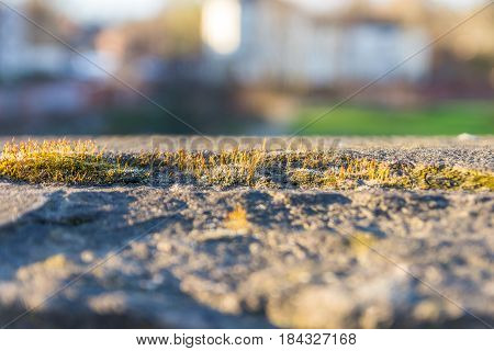 Close up view of grass growing on concrete.