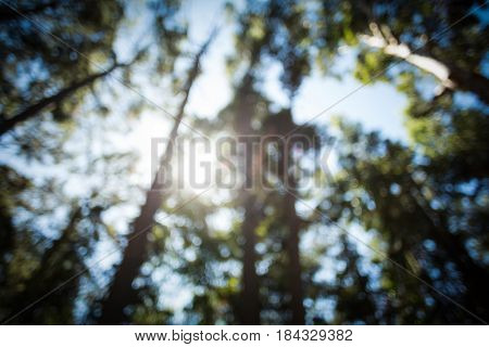 Blur view of trees in forest on a sunny day