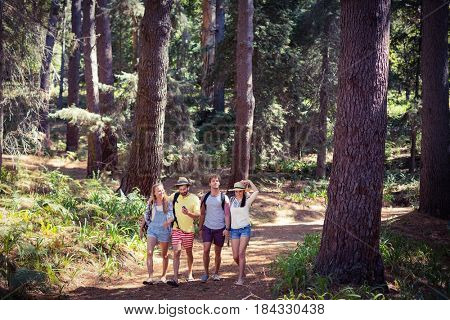 Group of friends walking together in forest on a sunny day