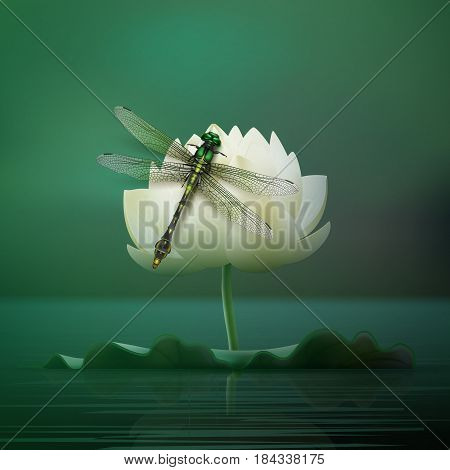 Vector realistic Gomphus vulgatissimus dragonfly sitting on lily flower with blur dark turquoise pond background front view