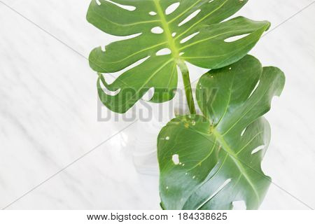 Beautiful White Mable With Green Plant On Top stock photo