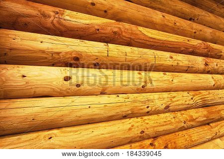Pine log wall of the wooden house.