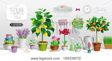 Big collection of the pot plants citrus trees flowers garden tools and signboards