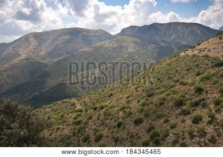 Mediterranean vegetation in Grazalema Natural Park. It is a Natural Park in the northeastern part of the province of Cádiz, in southern Spain