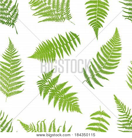 Vector illustration of green Fern seamless pattern.