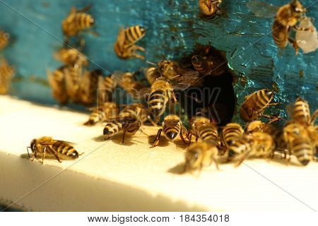 Many bees near the hive. Insects near the hive