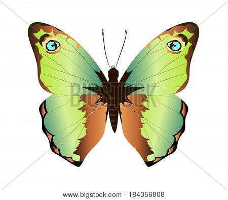 Isolated beautiful butterfly on white background. Green and brown colors.