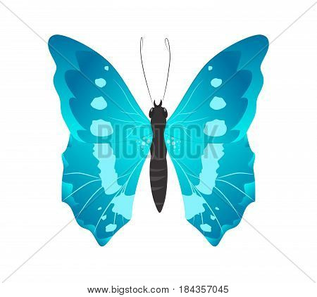 Isolated beautiful butterfly on white background. Blue colors.