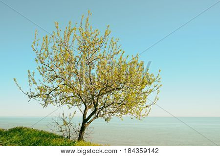 Tree at seaside on sky background in retro style