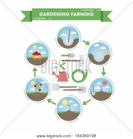 Stages of planting food. Plant, cultivate, grow and pick up