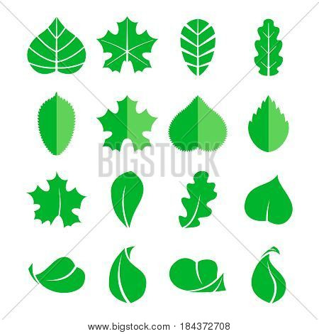 Different leaf set. Vector icons. Design eco elements isolate on white background. Green leaf tree, illustration of natural leaf