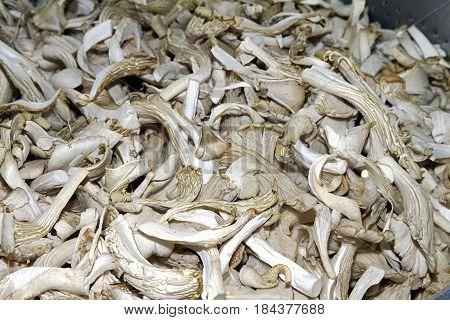 oyster mushrooms white asia pleurotus natural  healthy